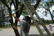 Poda das árvores externas