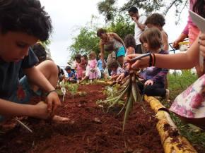 Vertical do plantio da Agrofloresta em 2015